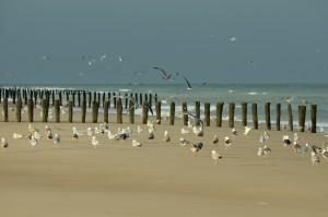 oiseaux sur le sable